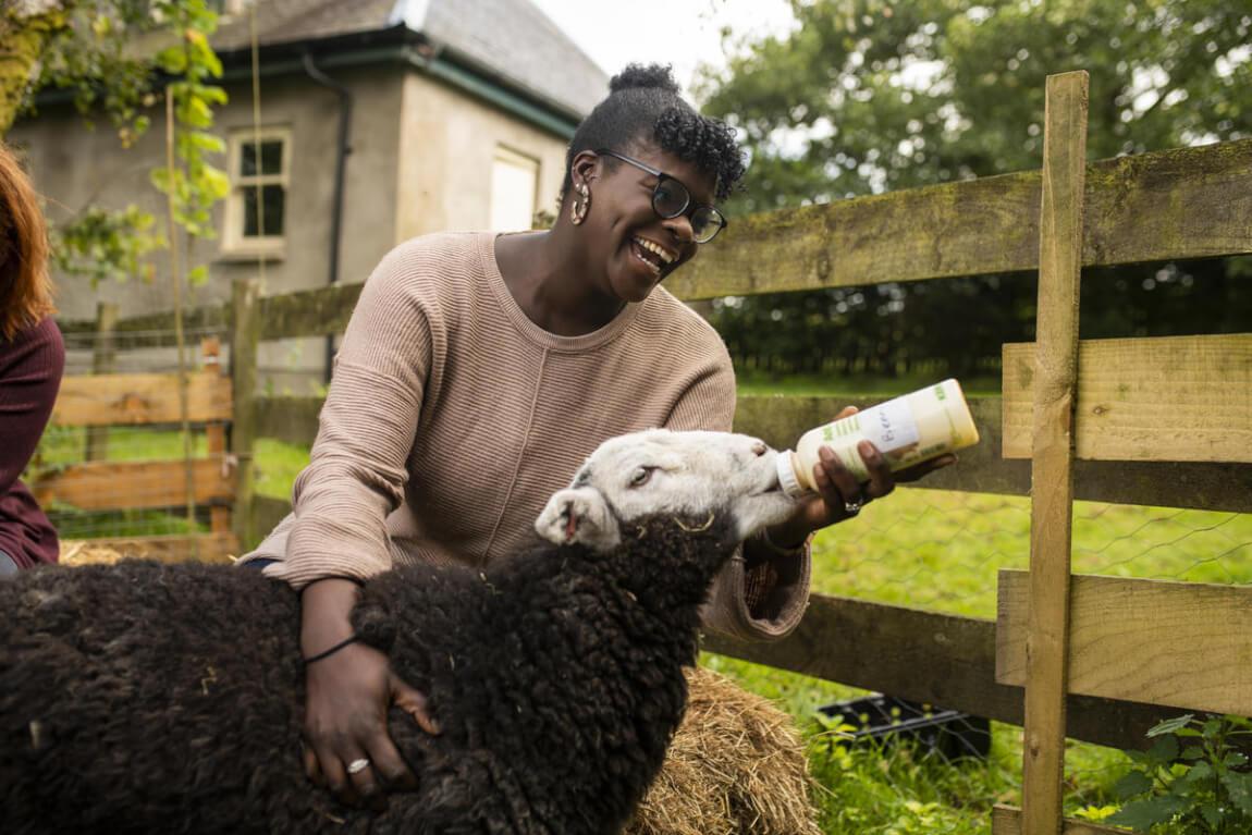 Tea with Lambs